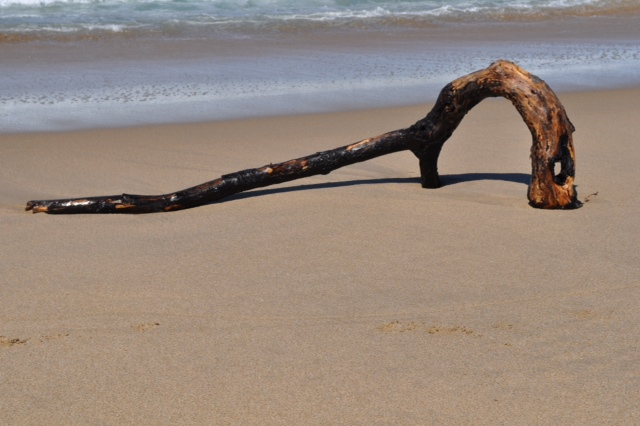 Walking on local beach and happened upon this beautiful curved driftwood.