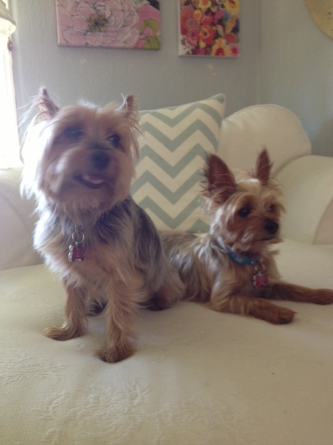 So cute, a cheerful pair on a chair...Peaches and Gigi. from Kellie