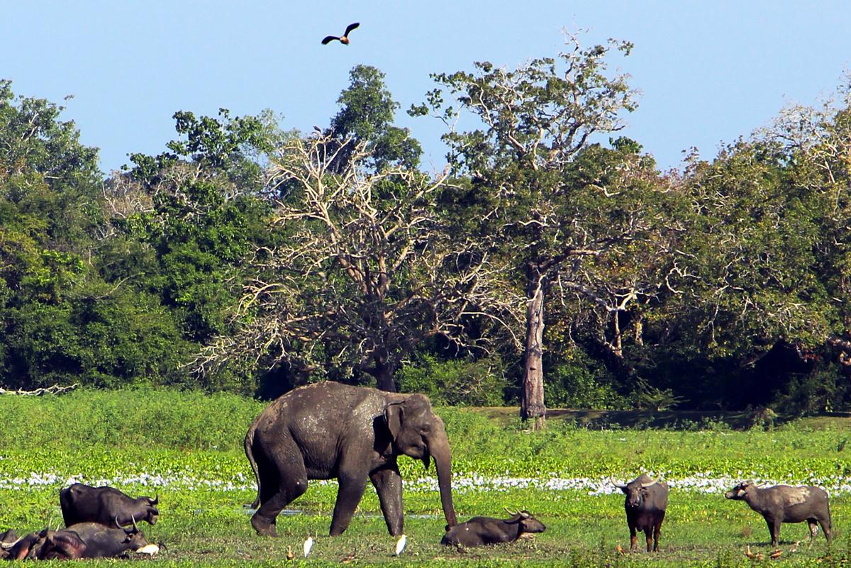 sri-lanka-arugam-bay-elephant-surf-vague-est