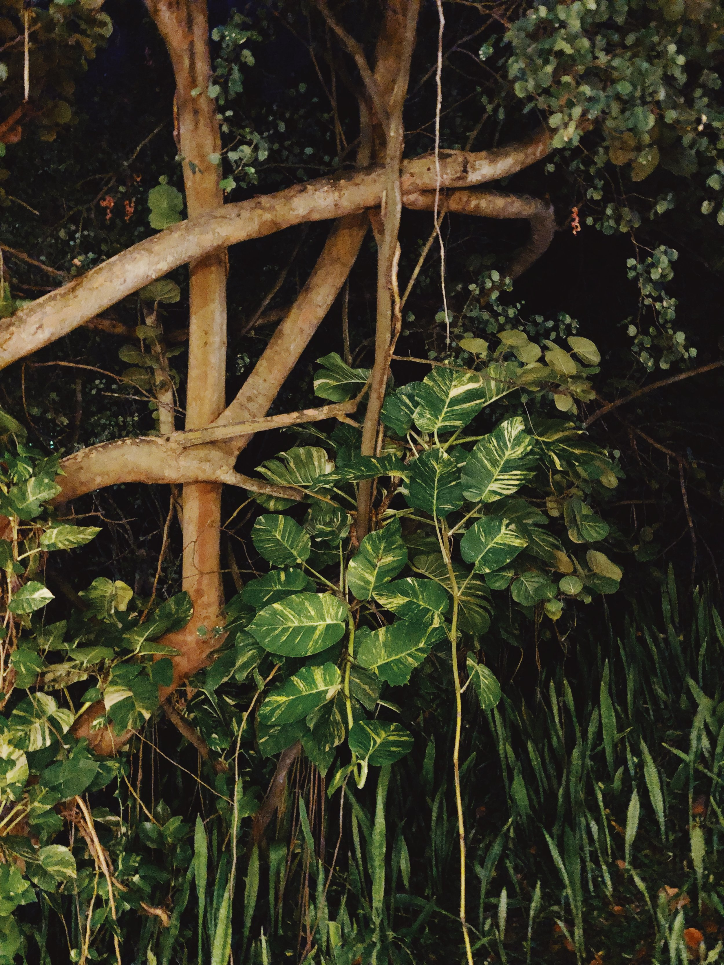 nature_denuit_creolebeach_©virginielentulus.JPG