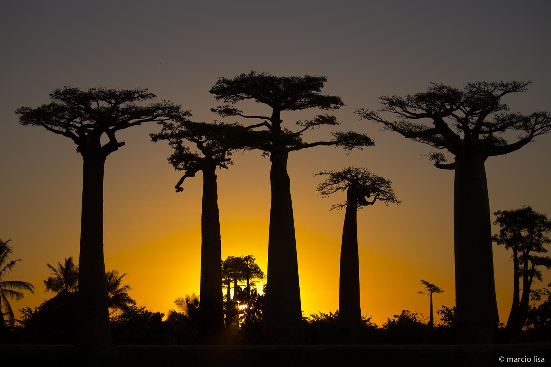Aventura em Madagascar