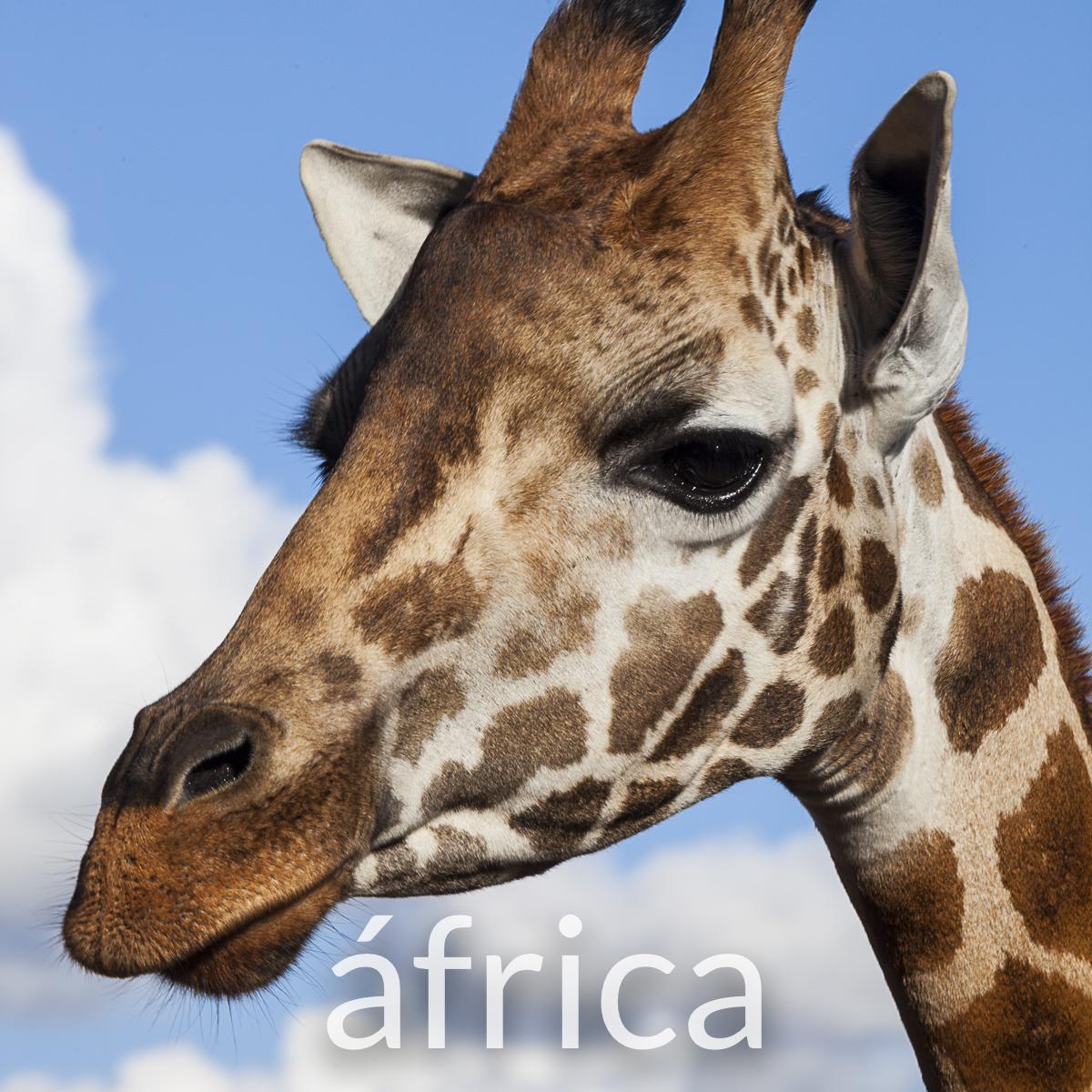 Fotografia Africa.jpg