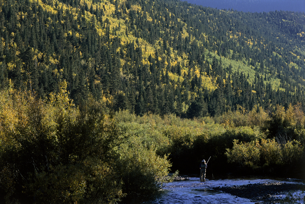 Fly fishing and fall colors