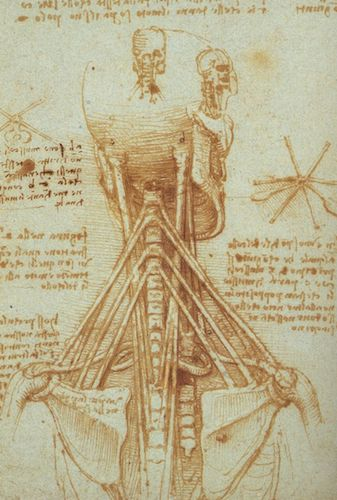 """Anatomy of human neck"" (c.1515), by Leonardo da Vinci. Source: commons.wikimedia.org/"