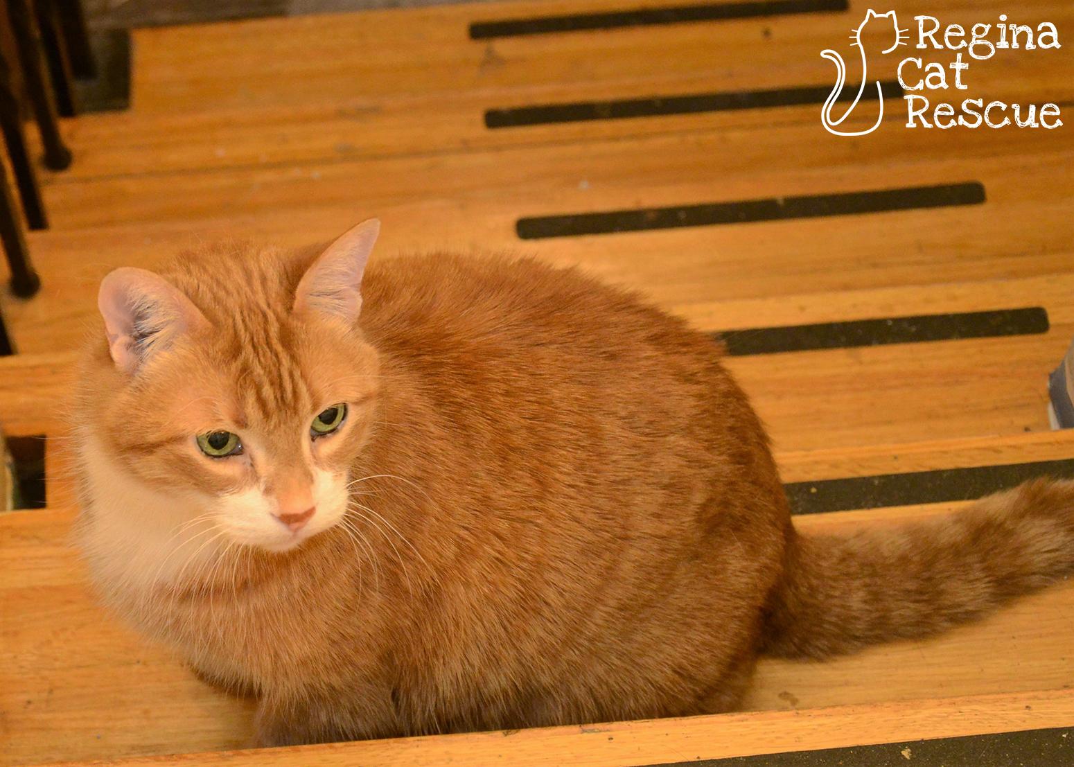 Ginger5-March2018.jpg