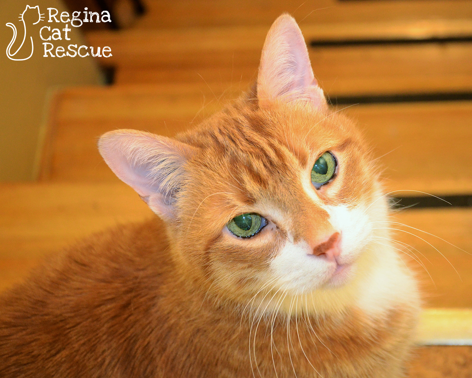 Photos of Ginger by RB Photography