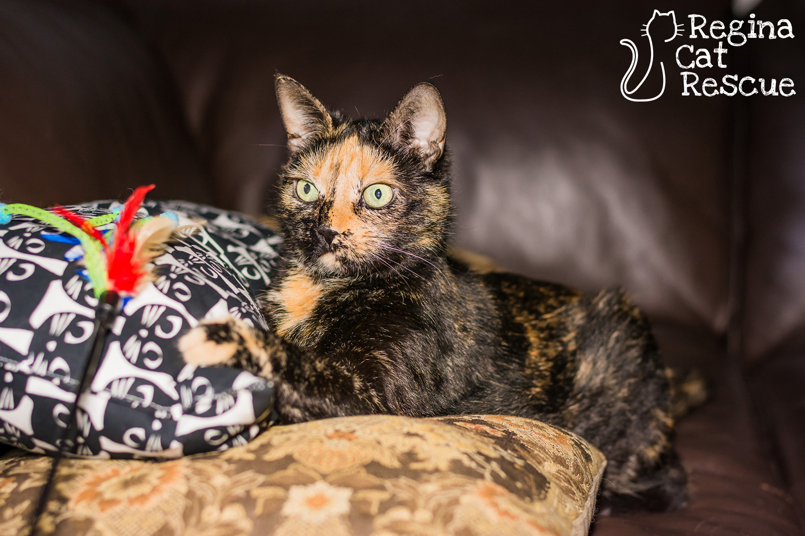 Photos of Maow by Lindsey-Frozen Moments Photography