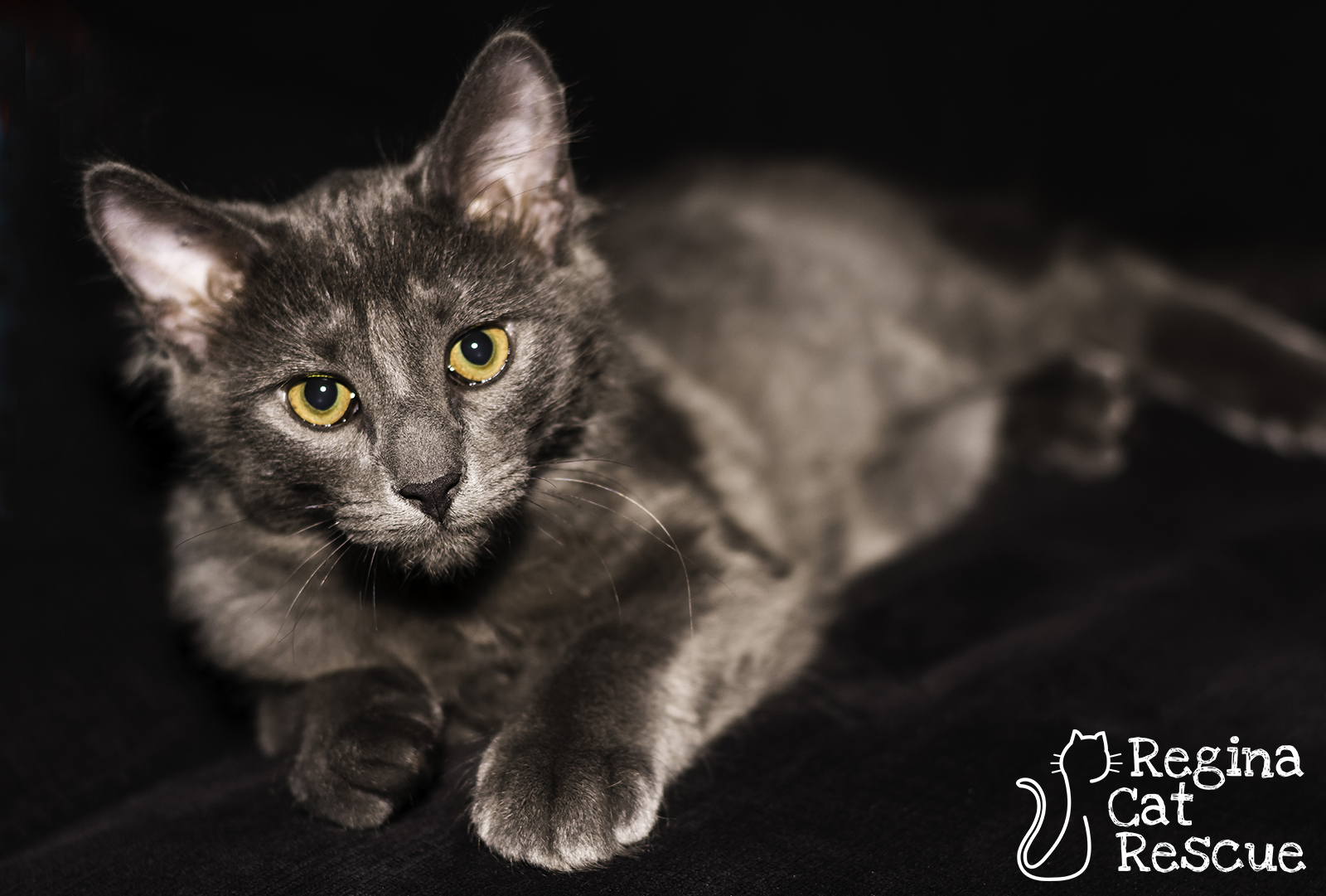 Photos of Houdini by Lindsey-Frozen Moments Photography
