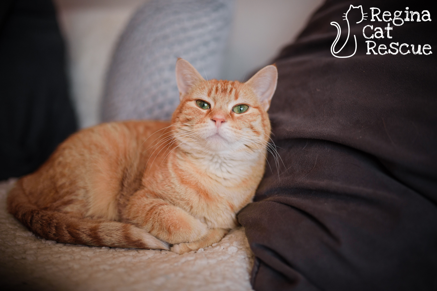 Photos of Allie by Erika Gayle Photography
