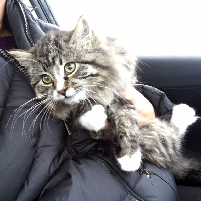 Tally warms up in a car after being unfrozen from a gravel road where she was stuck