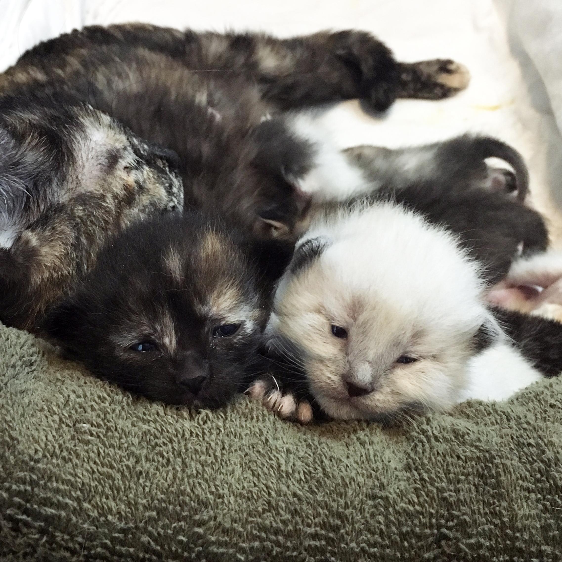 KittenSeason.jpg
