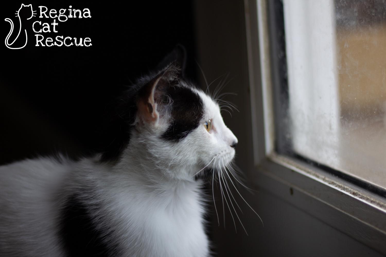 Fiona4.jpg