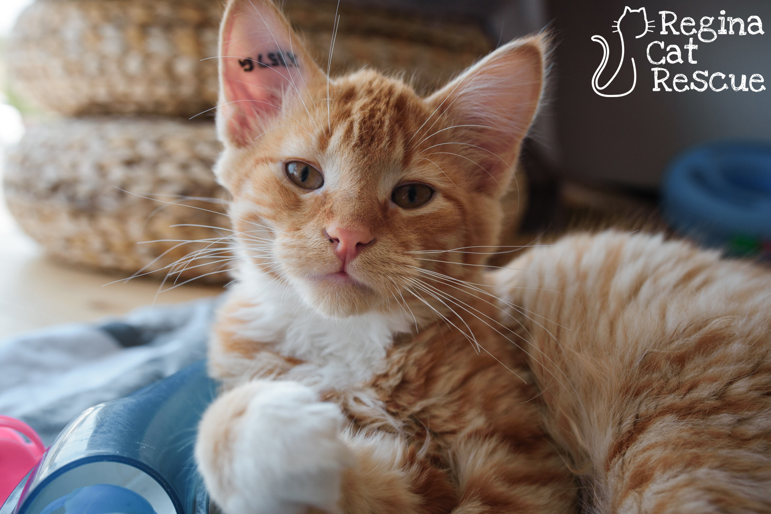 Photos of Oliver by Erika Gayle Photography