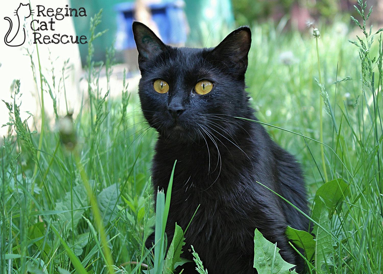 Our Programs — Regina Cat Rescue