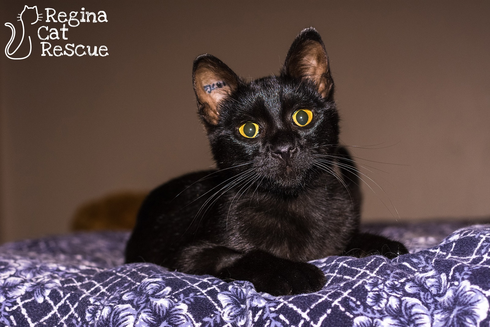 Photos of Onyx by Lindsey-Frozen Moments Photography