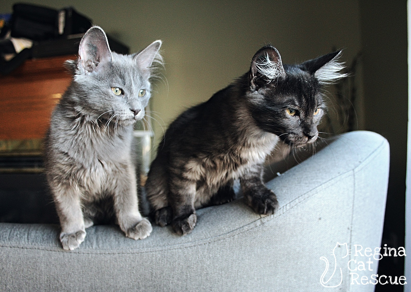 Smokey (left) and  Slate  (right)