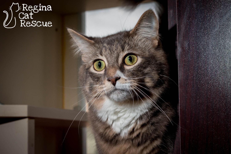 Regina Cat Rescue