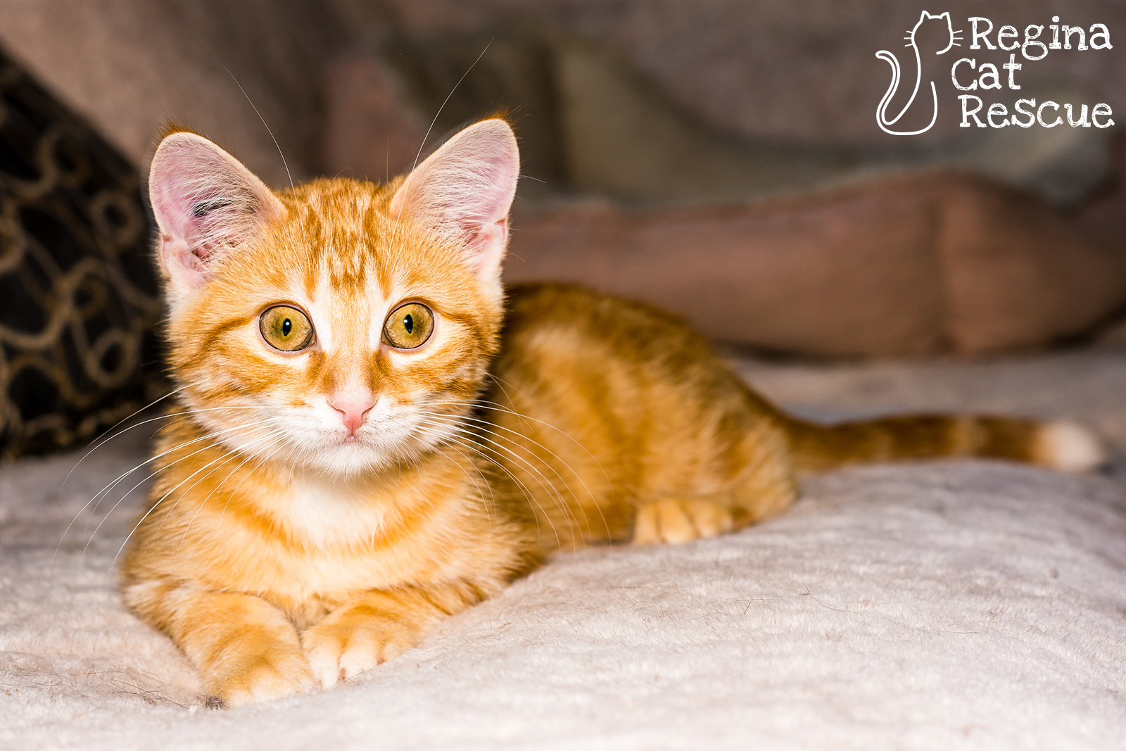Photos of Fred by Lindsey Sawatsky - Frozen Moments Photography