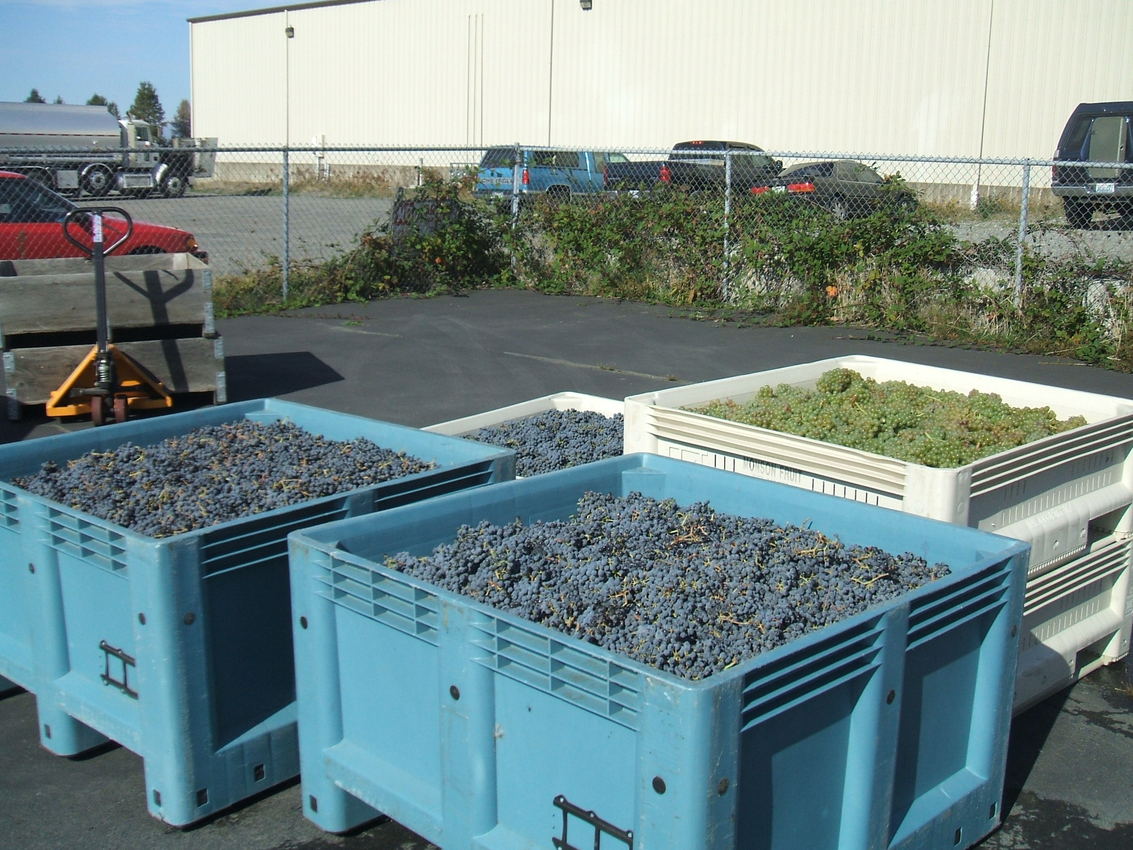Cabernet and Marsanne grapes