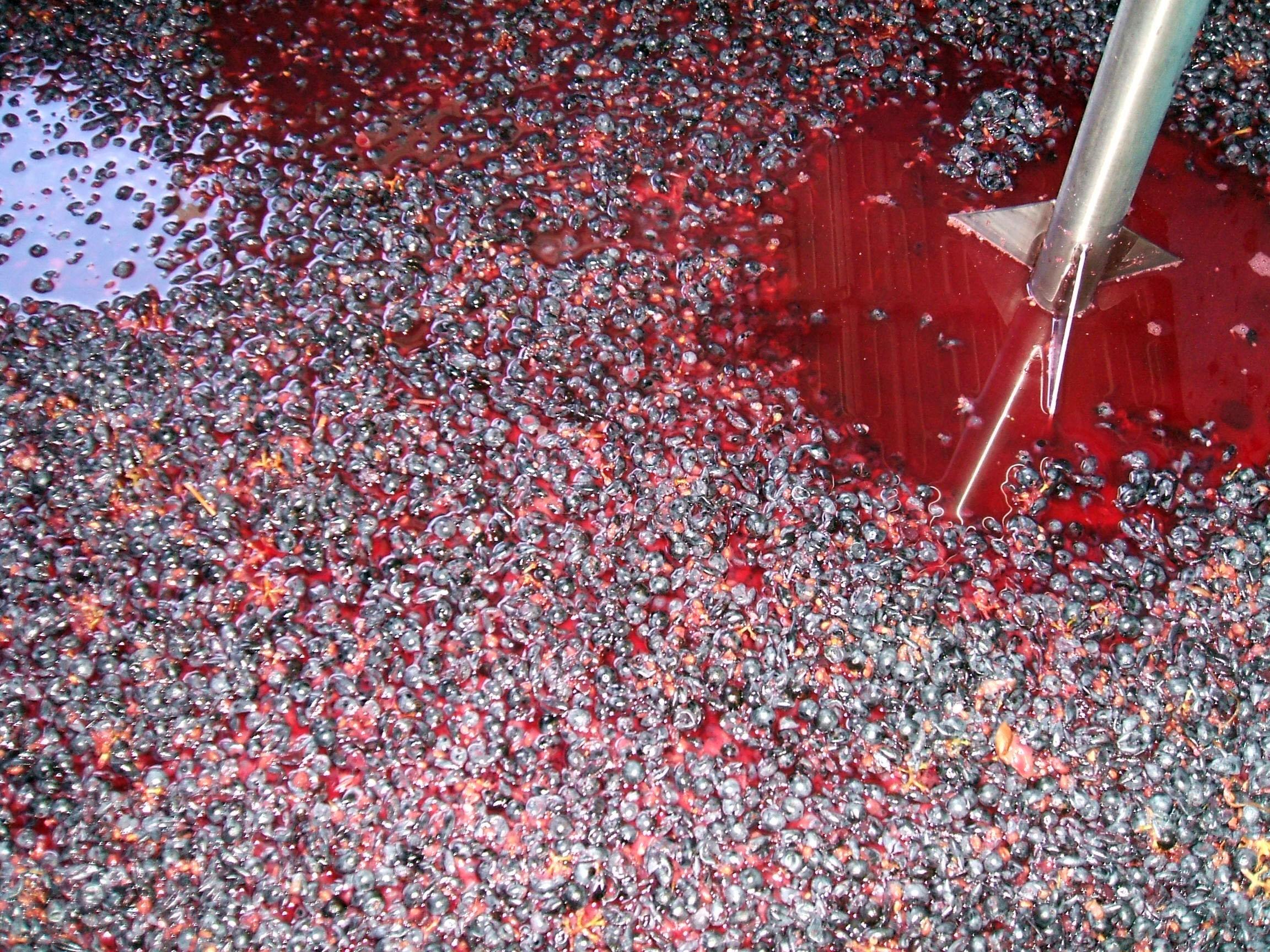 Cabernet Sauvignon skins in Marsanne juice, in a pre-fermentation, cold soak.