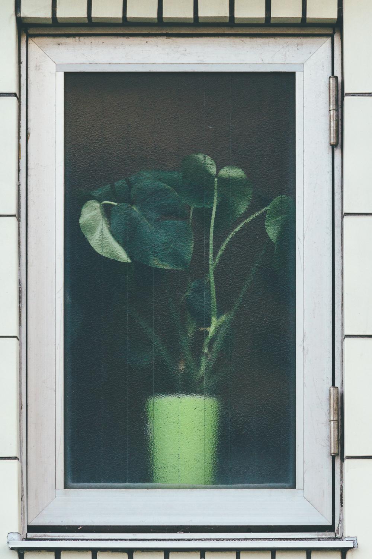 Behind Glass #9149 (Komae)