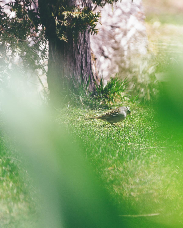 Bird in Green, Bruce Mines