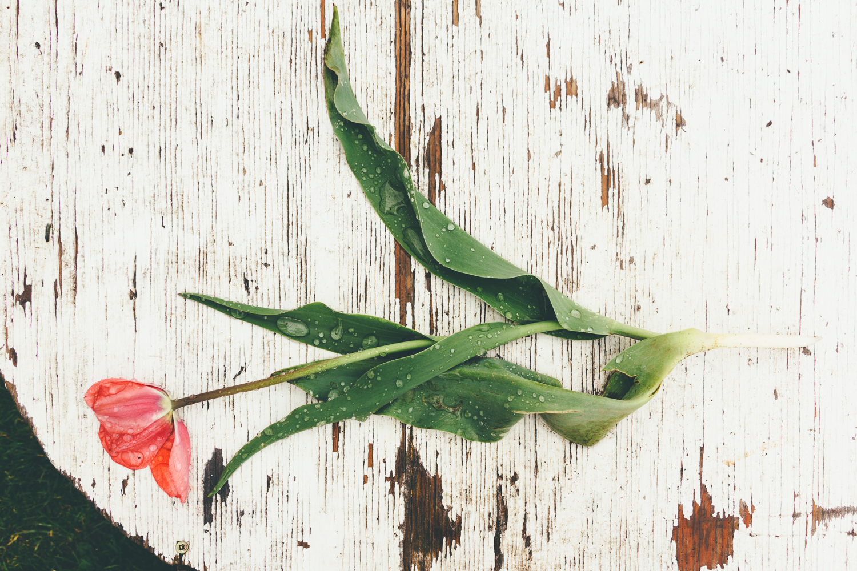 Stilled Life, Flower, Bruce Mines