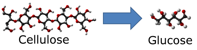 Cellulose to glucose 750.png