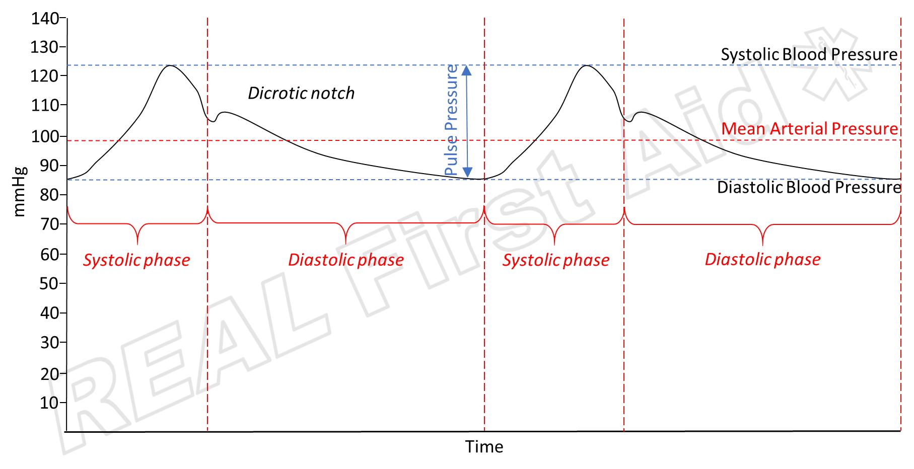Cardiac Cycle