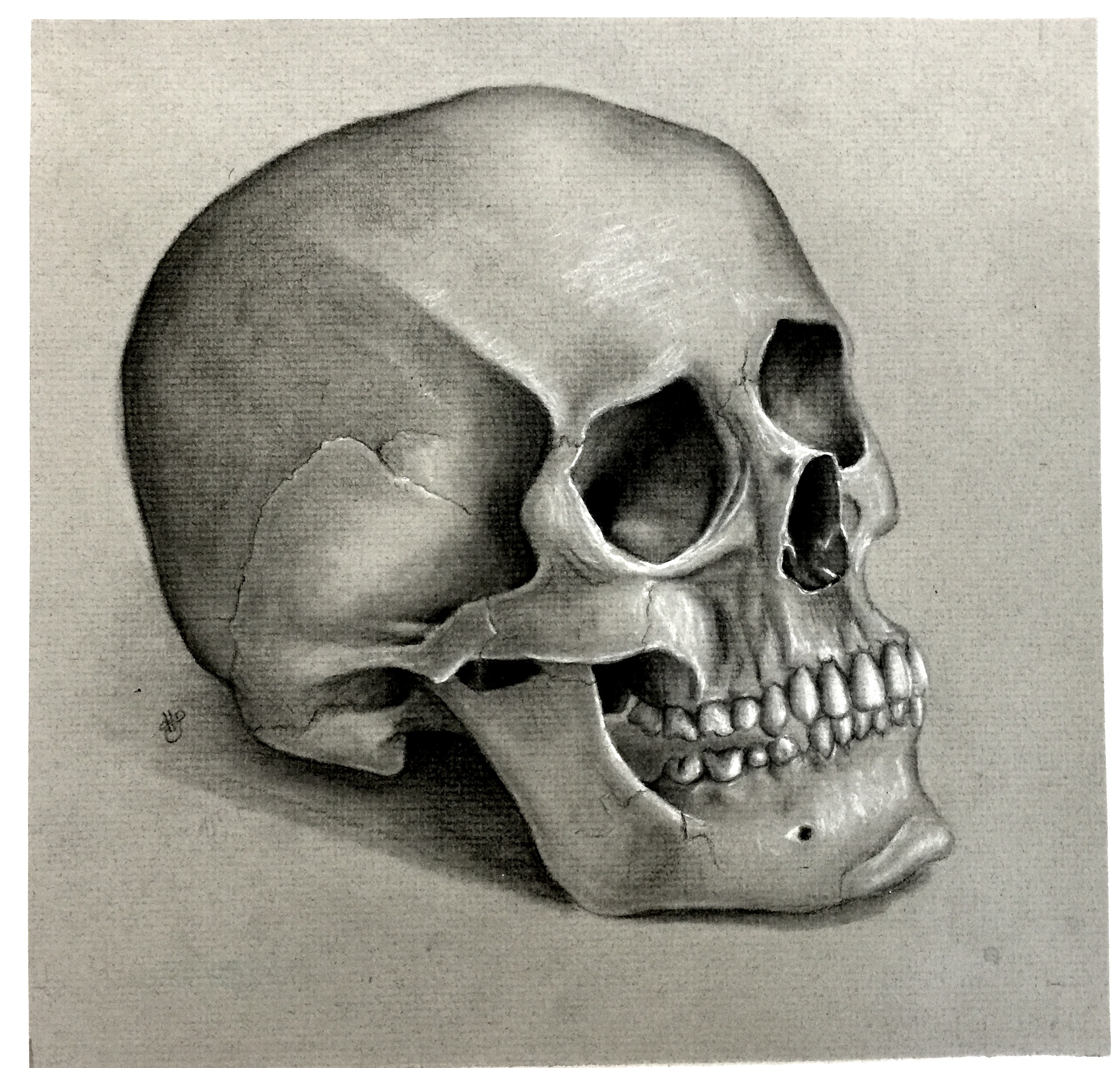 """Hayden Schroader's first place drawing, """"Skull."""" Click the picture above to expand."""