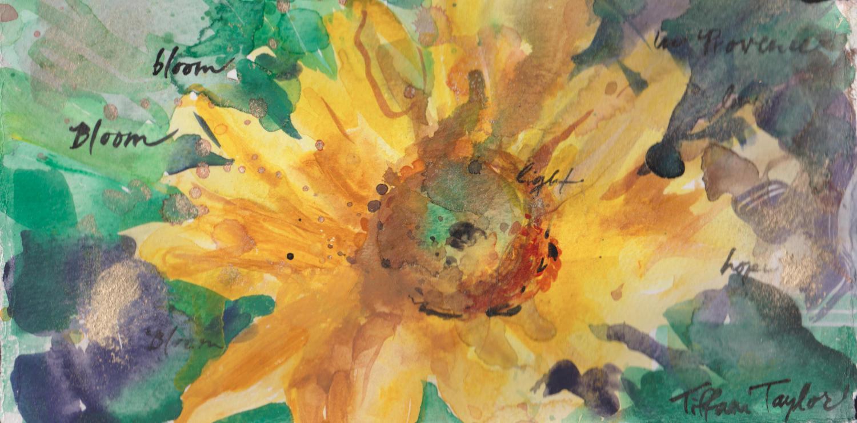 Sunflower:  Bloom
