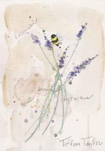 Lavender:  Beauty