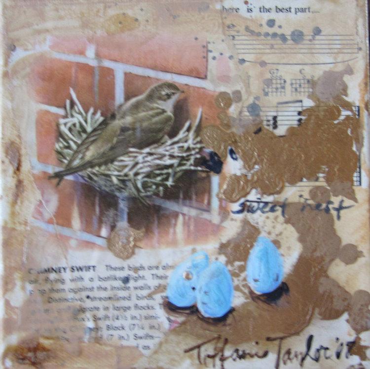 Chimney Swift: A Nest