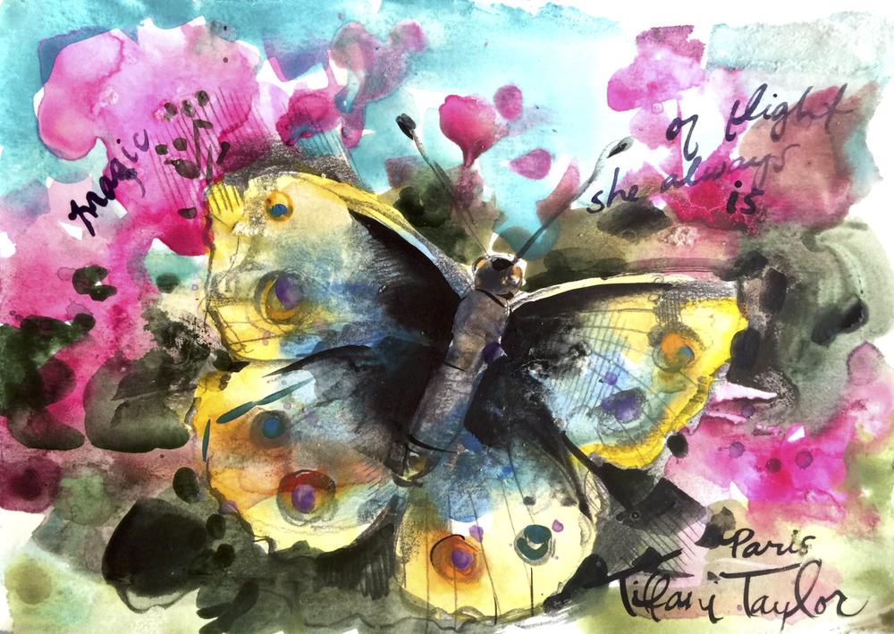 Butterfly: Magic, of flight she always is...