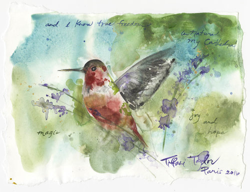 Hummingbird: Nature, My Cathedral...
