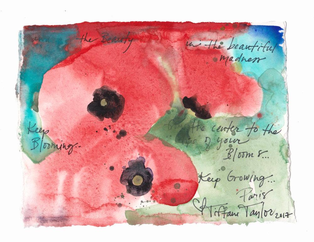 Poppies: Beautiful Madness