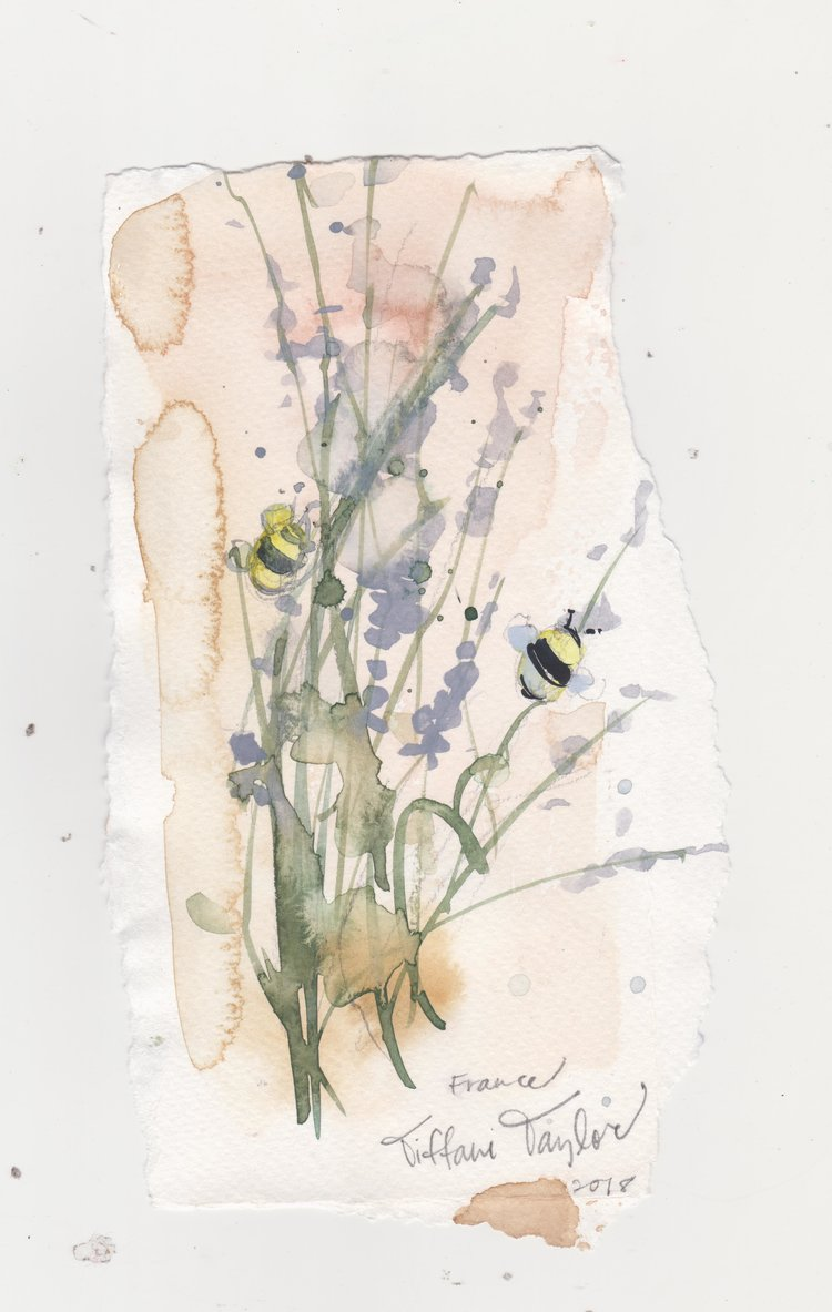 Bumble Bee and Lavender Sprigs Study