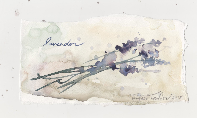 Lavender Study en Provence