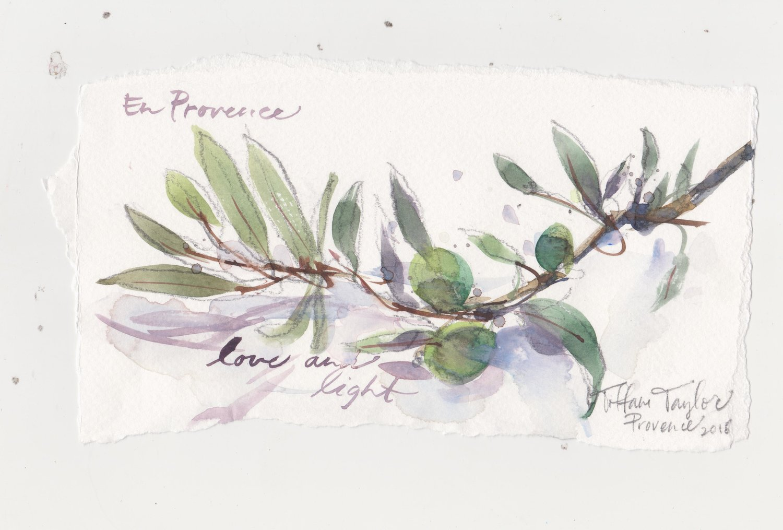 Olive Branch Study: En Provence
