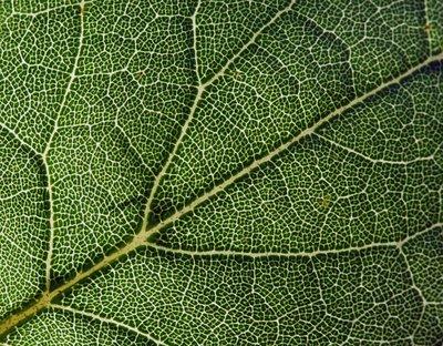 nature_5.jpg