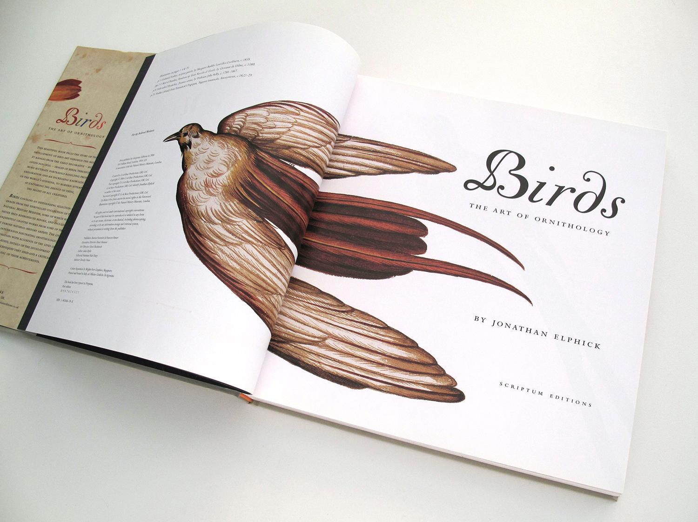 sqsp_birdsNHM_04.jpg
