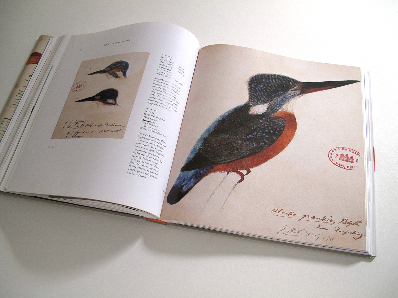 sqsp_birdsNHM_10.jpg