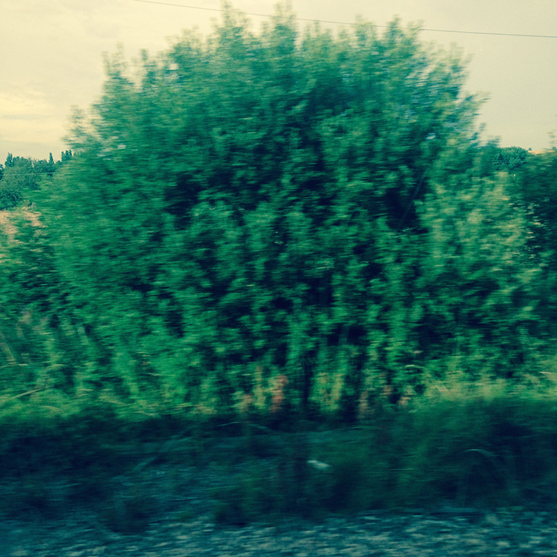 train trip david mackintosh_04.jpg