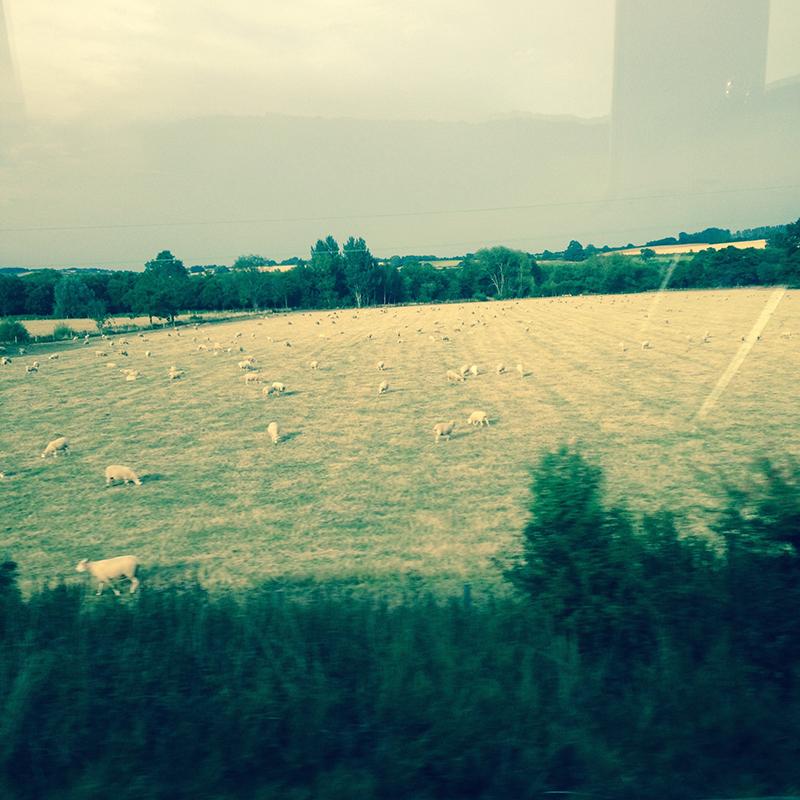 train trip david mackintosh_10.jpg