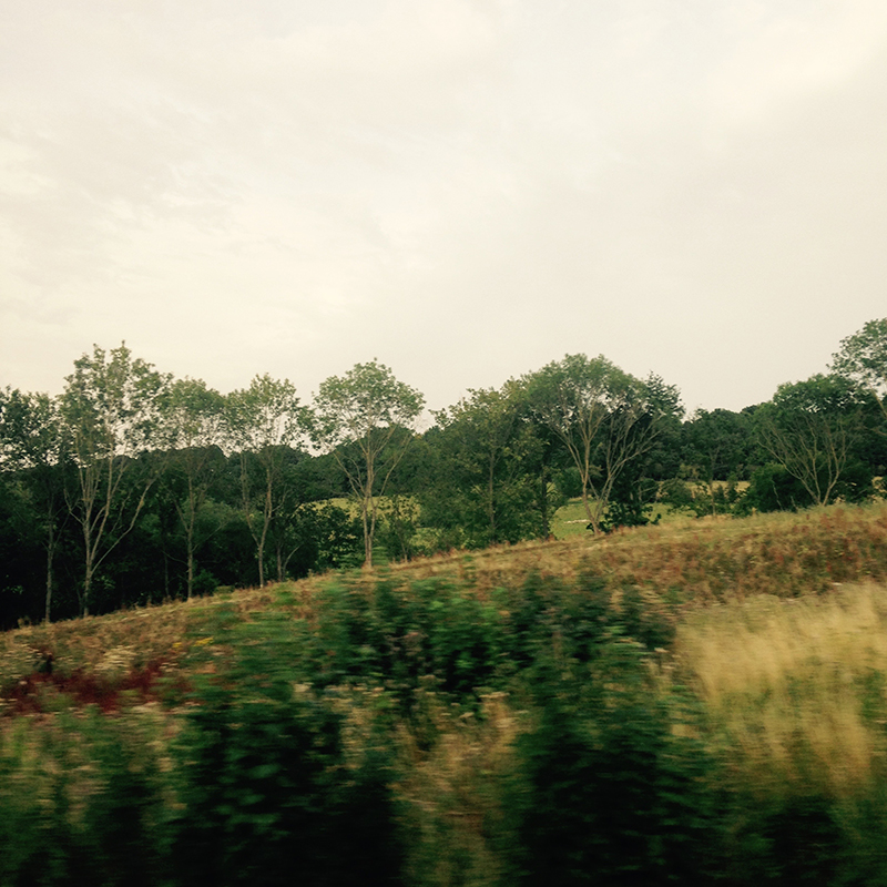 train trip david mackintosh_13.jpg