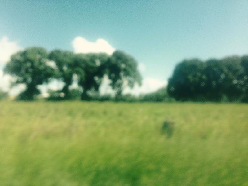 roadtrip24.jpg