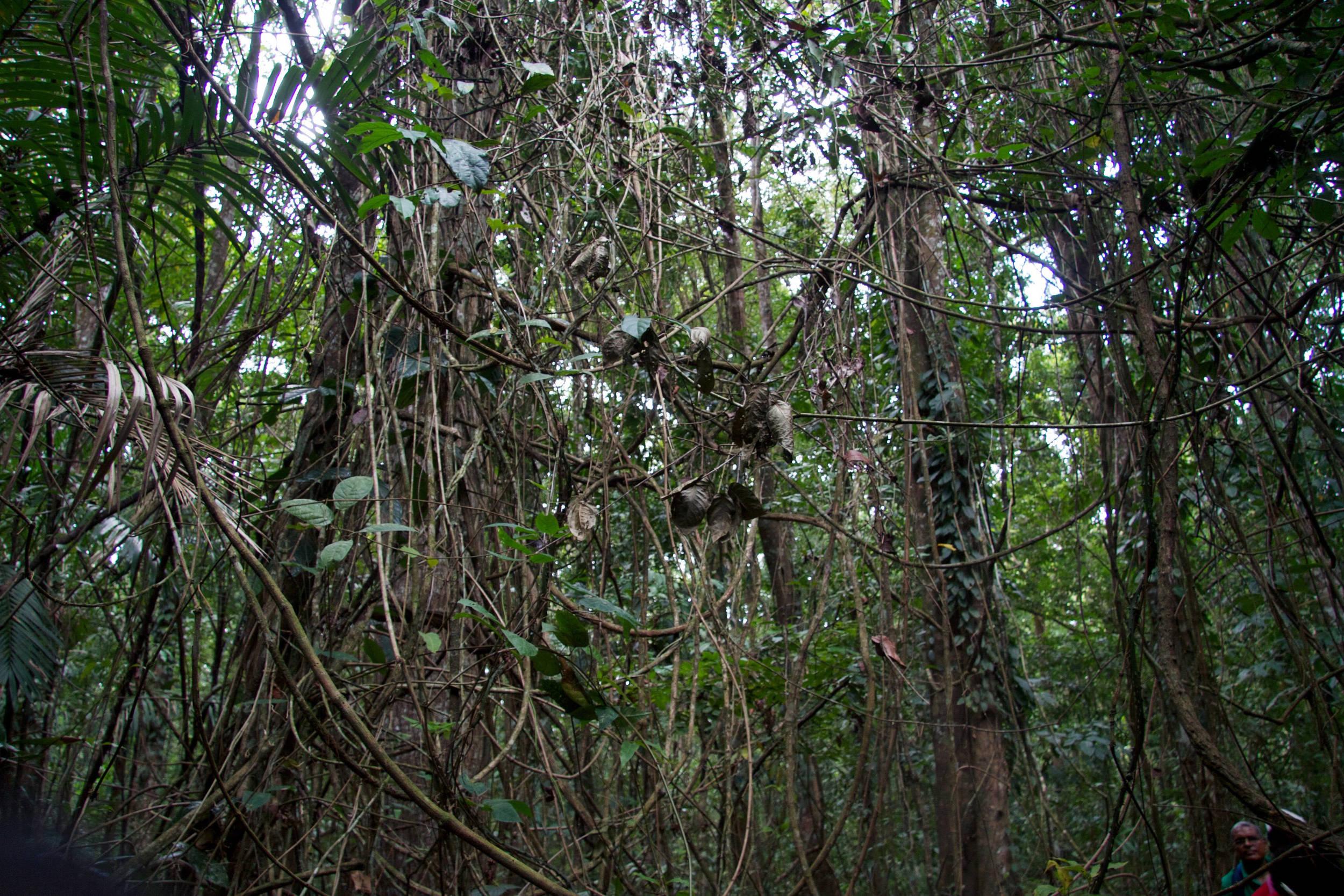 Moruga Forest
