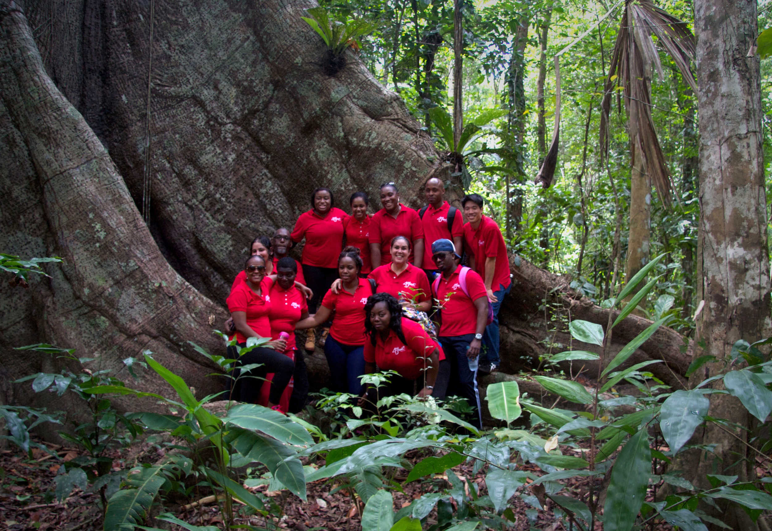 Kapok Staff