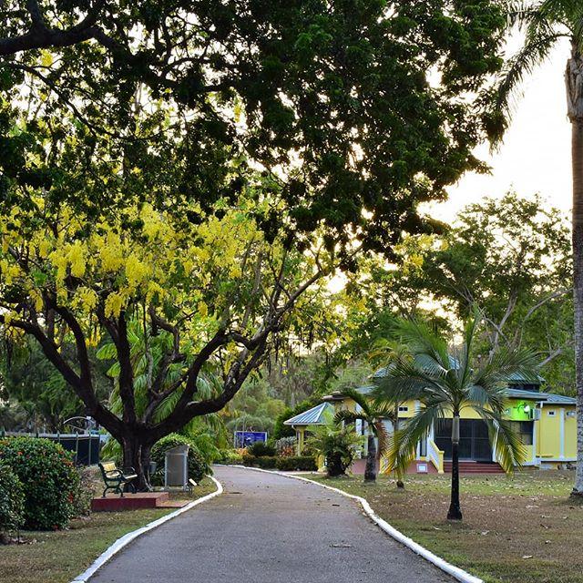 We have the best neighbors! #royalbotanicgardens #kapokneighbors #queensparksavannah  #trinidadandtobago #kapokhotel