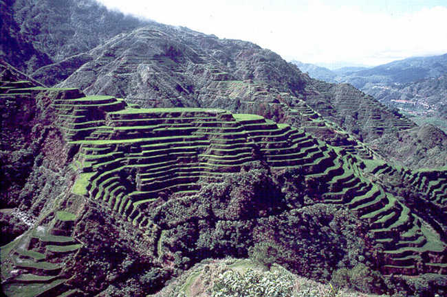 Banaue rice terraces in the Philippines, grown over thousands of years.